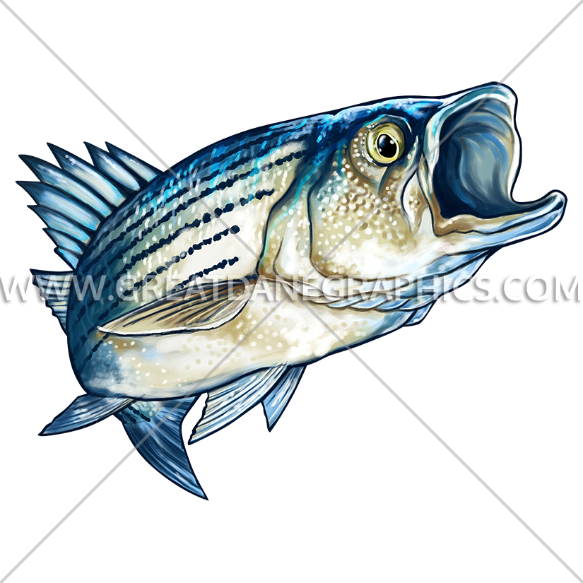 Production ready artwork for. Fishing clipart striped bass