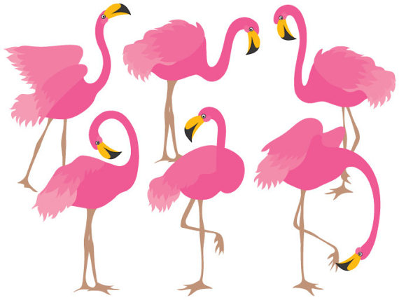 Flamingo clipart. Digital vector bird exotic