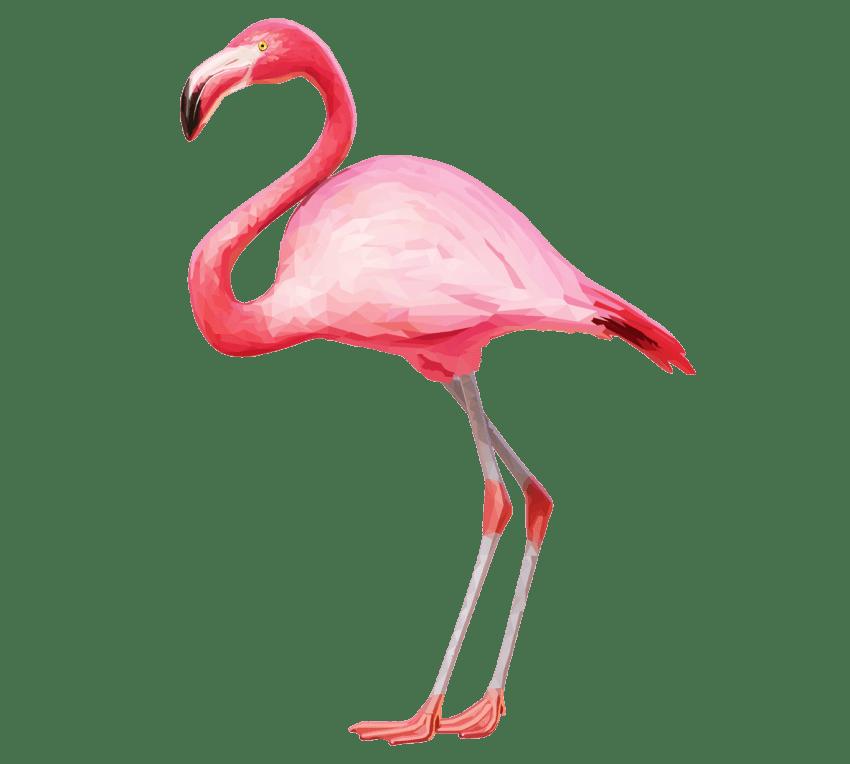 Clipart flamingo   Carmel.captainamericagifts.com