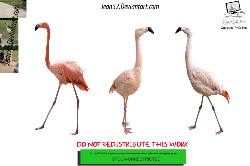 Flamingo clipart group. Pink flamingos png by