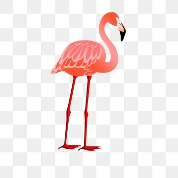 red dragonfly animal. Flamingo clipart group