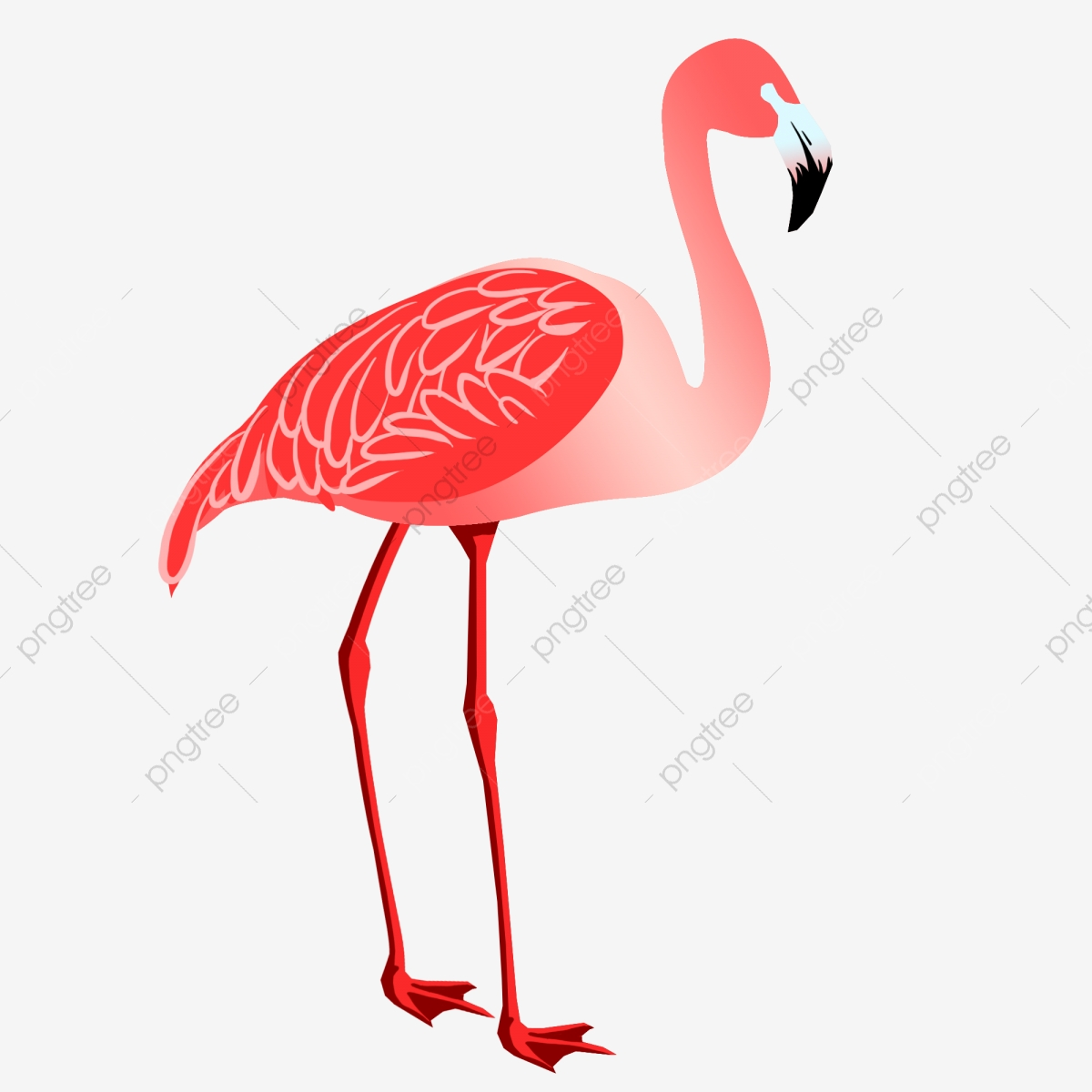 Flamingo clipart group. Red dragonfly avian neck