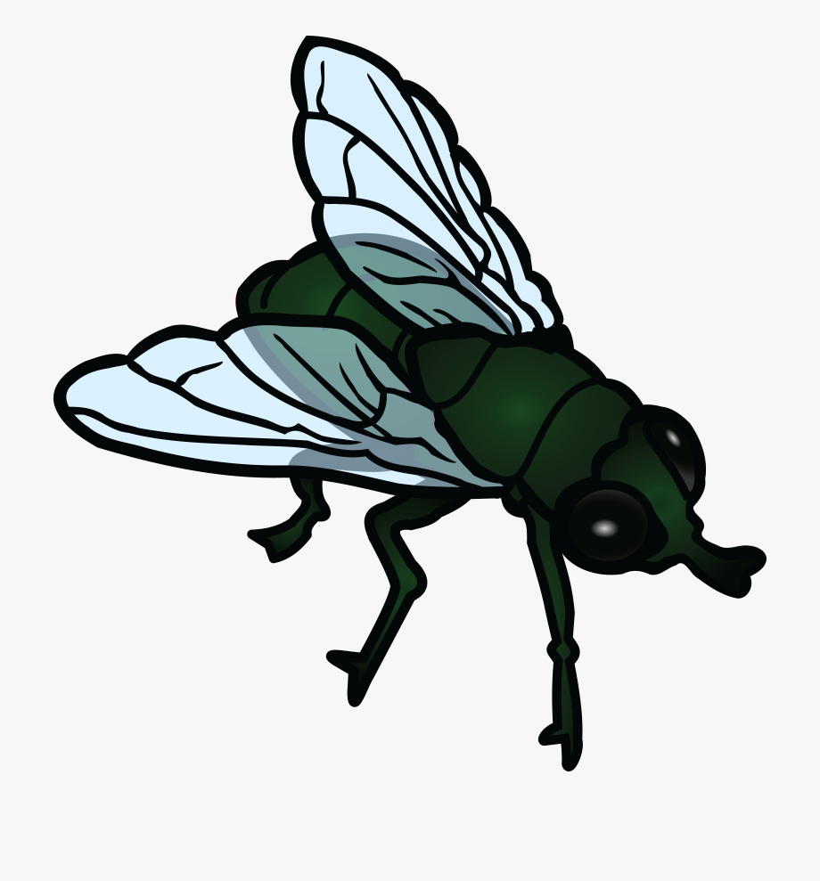 Insect clipart fly. Transparent cartoon