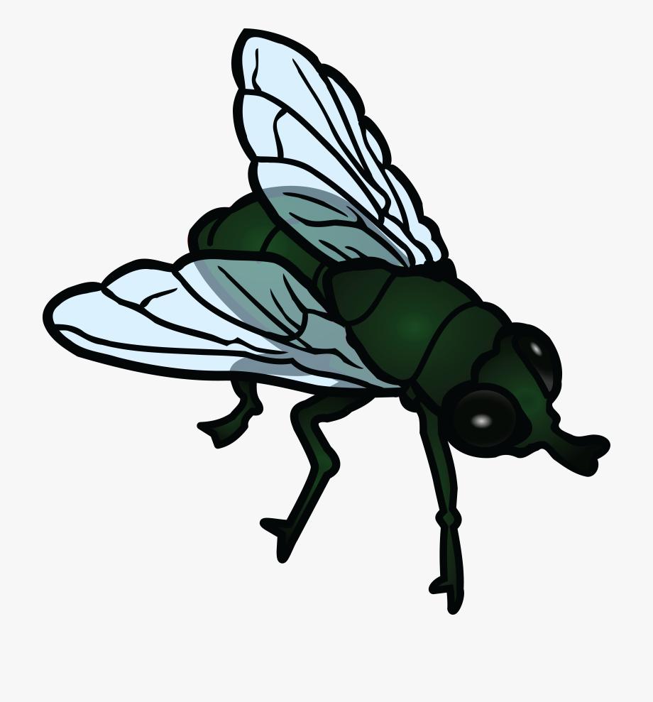 Transparent cartoon . Fly clipart