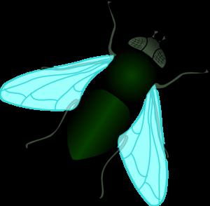 Green house clip art. Fly clipart
