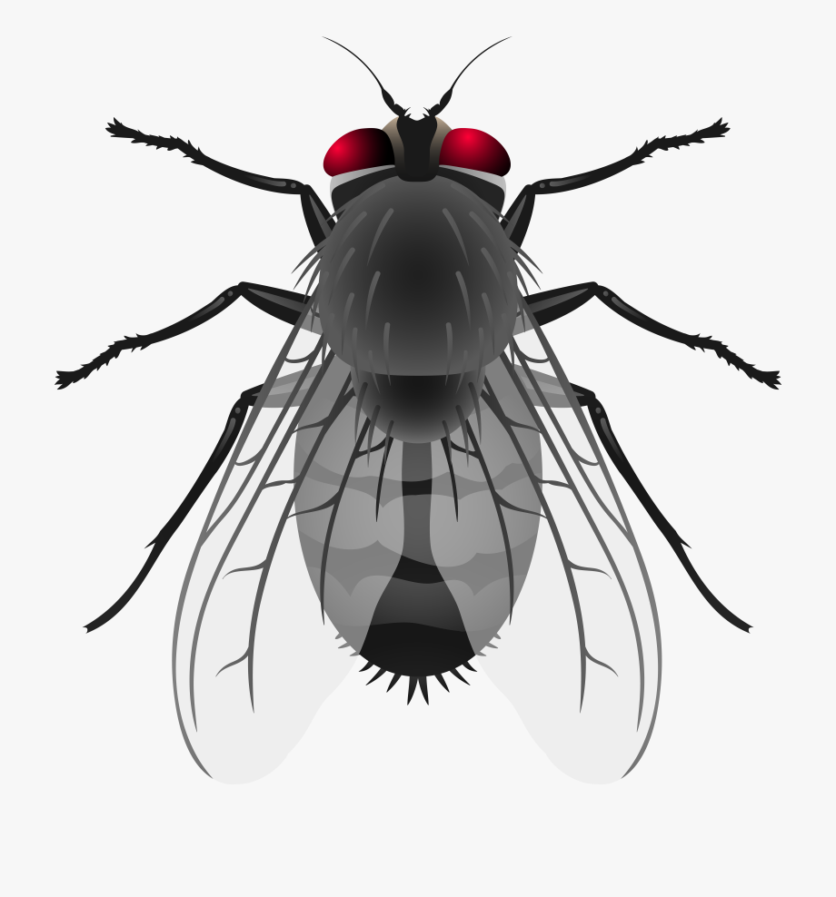 Png clip art free. Fly clipart insect