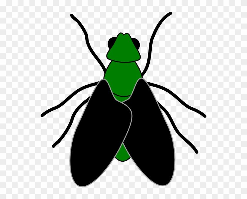 Clip art of fly. Flies clipart beetle
