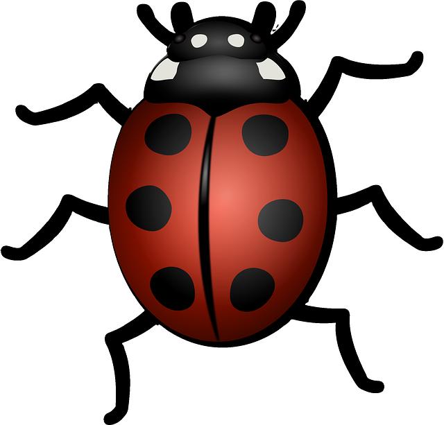 Flies clipart beetle. Lienka prekvapenie v tr
