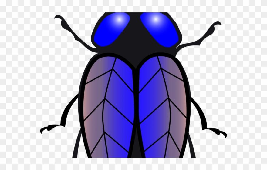 Flies clipart beetle. Fly lalat vektor png