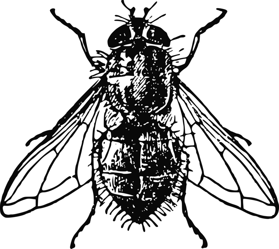 Fly clipart black and white. Free stock photo illustration