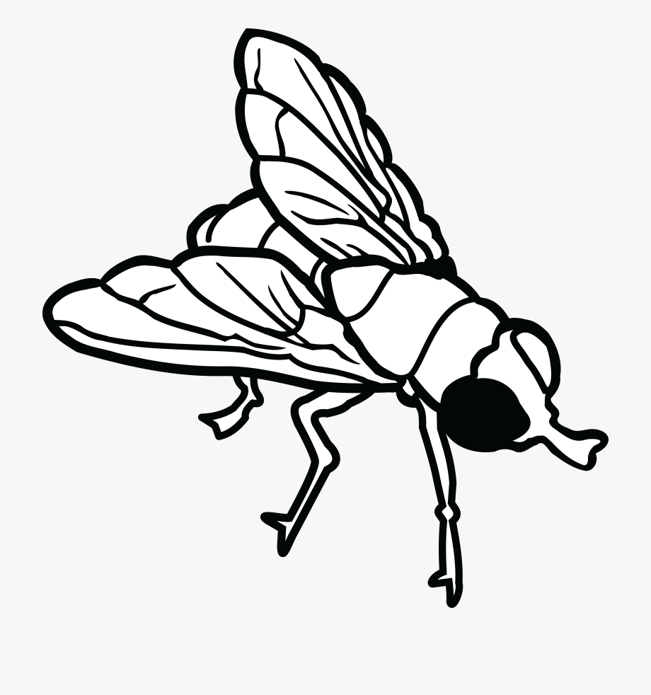Free of a house. Fly clipart black and white