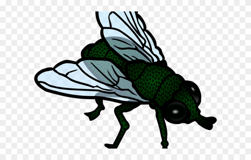 Fly little house png. Flies clipart bug