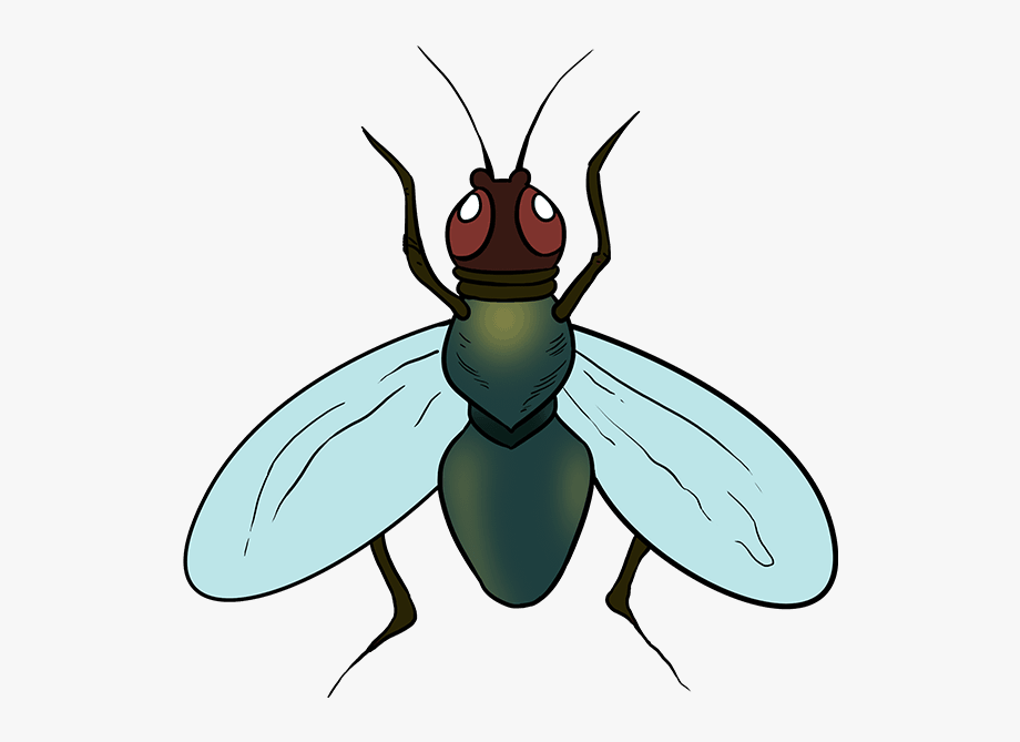 Fly clipart carton. How to draw a