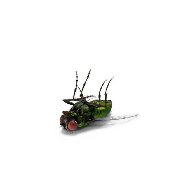 Insect green png download. Flies clipart dead fly