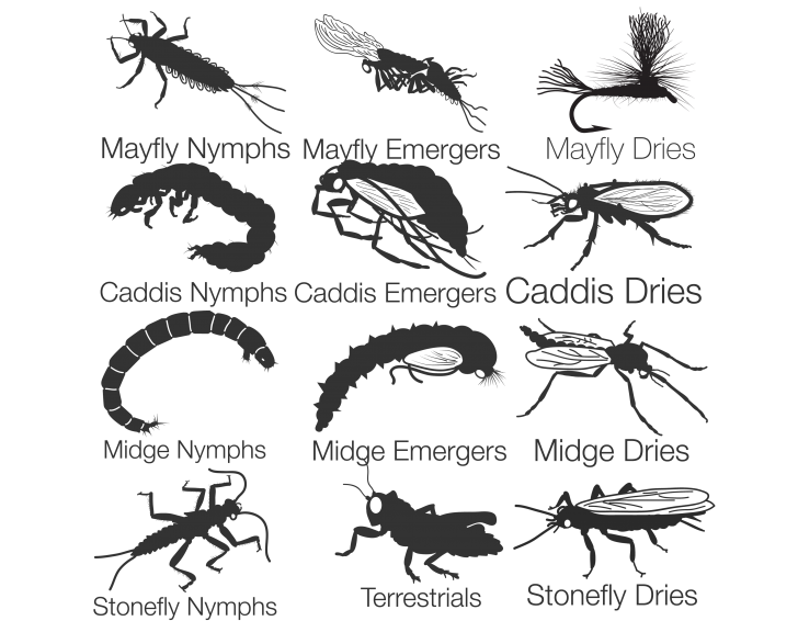 Fishing entomology by stage. Flies clipart dead fly