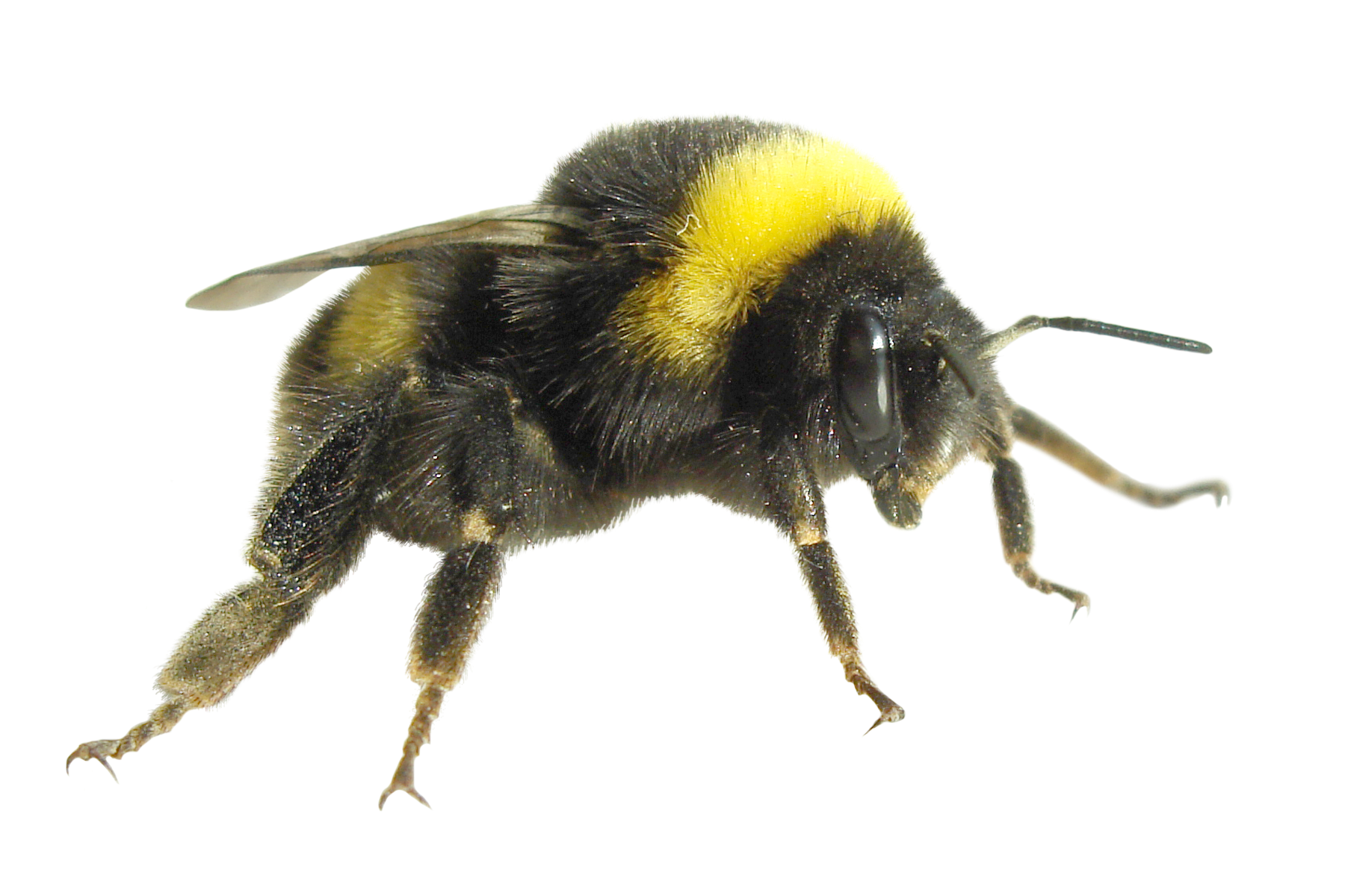 Flies clipart dead fly. A z of flying