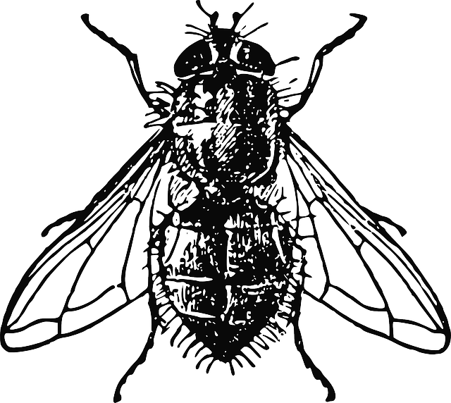 Fly by nemo pixabay. Insects clipart ancient egypt