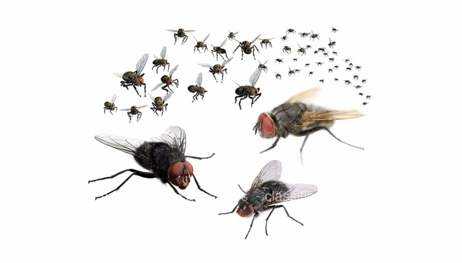 Control swarm of flies. Fly clipart flying fly