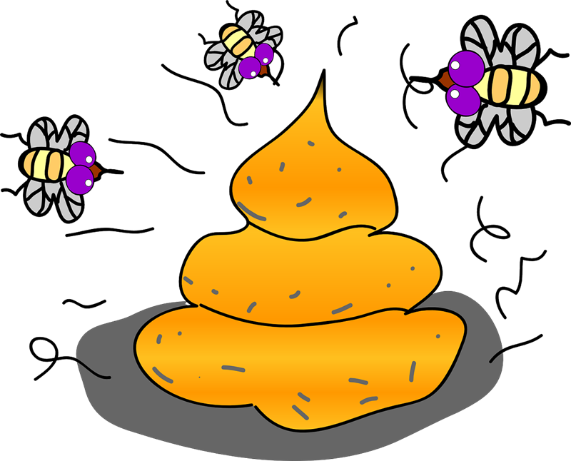 collection of flies. Shell clipart lord the fly