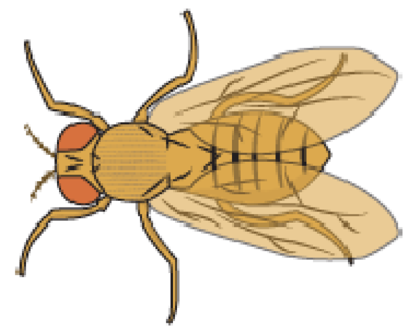 best find wonderful. Fly clipart fruit fly