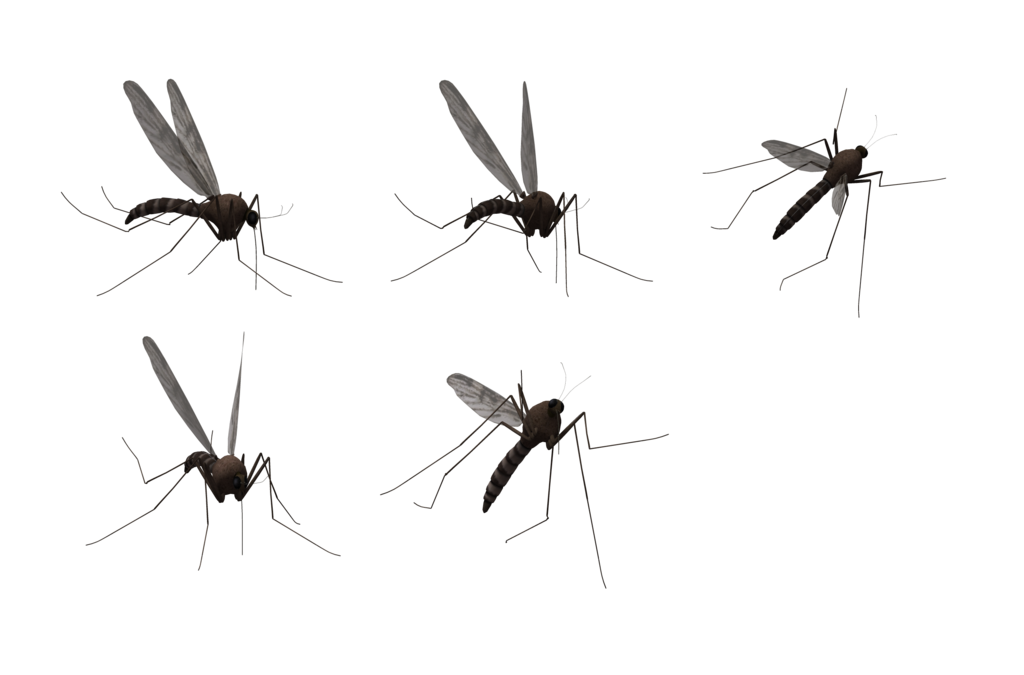 Fly clipart winged insect. Mosquito png images free