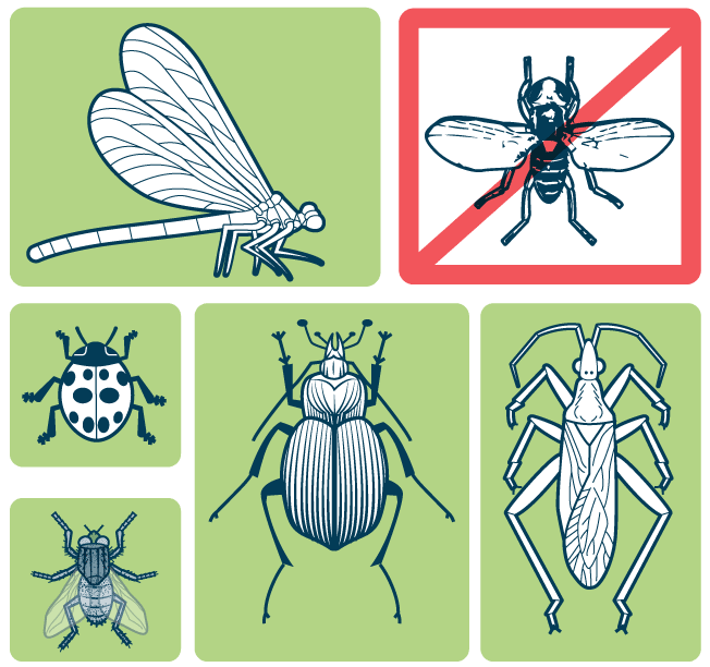 Fly clipart harmful insect. How to deal with