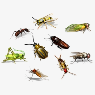 Flies insects png free. Fly clipart harmful insect