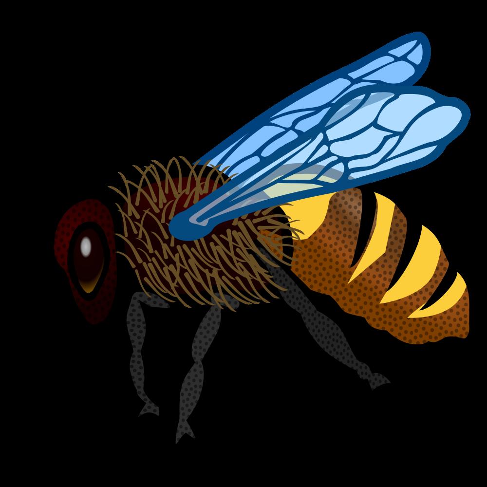 Onlinelabels clip art bee. Flies clipart house fly