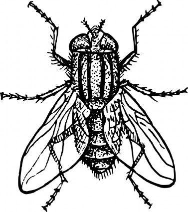 Flies clipart house fly. Clip art vector free