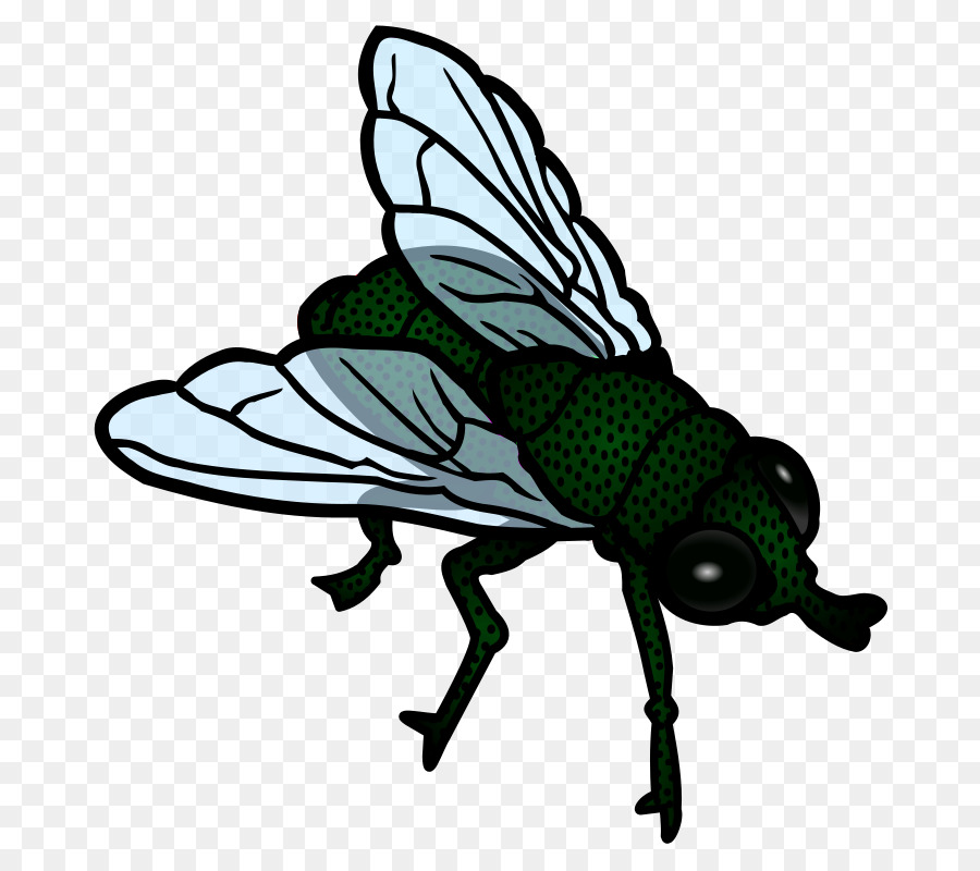 Flies clipart insect. Clip art fly wing