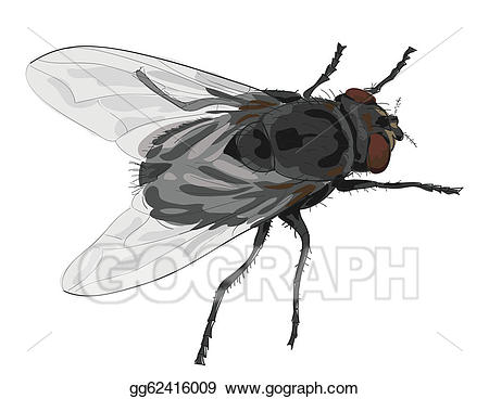 Insect clipart fly. Vector stock isolated on