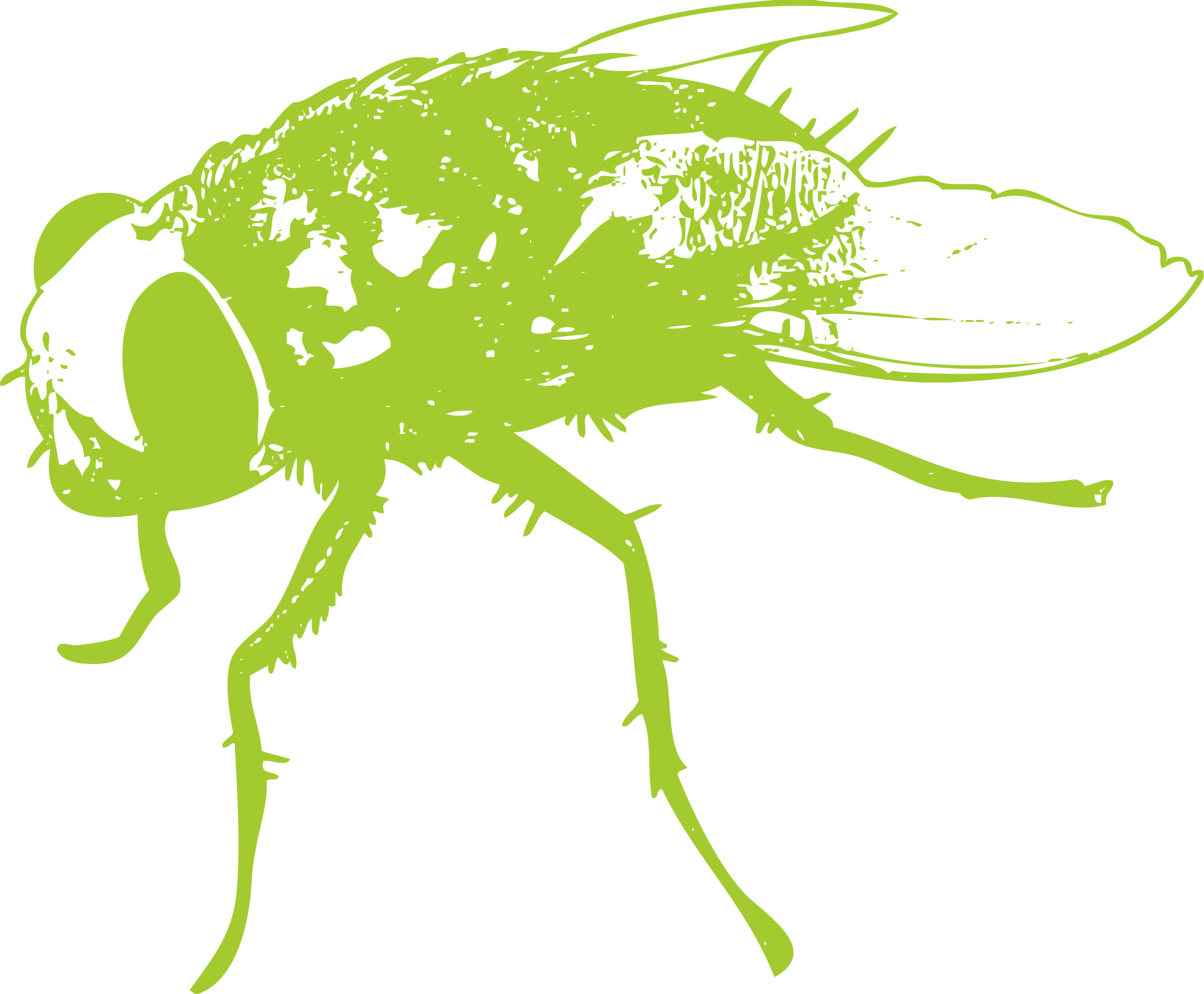 Flies clipart insect. Fly wing clip art