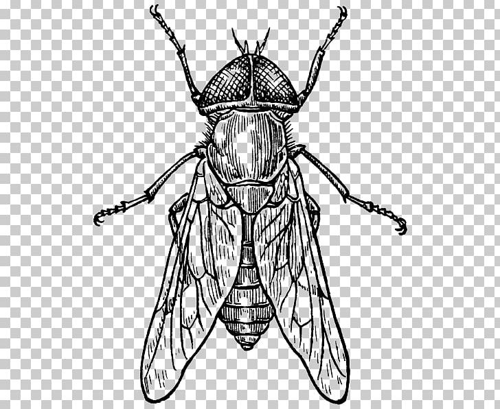 Fly clipart insect wing. Beetle drawing png animals