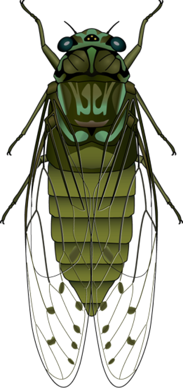 Flies clipart little bug. Horse fly insect and