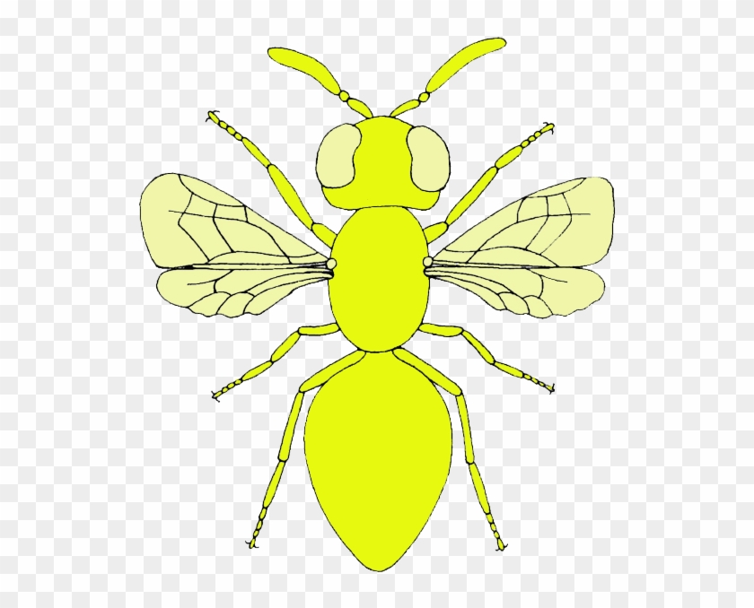Fly clipart mosca. Net winged insects hd
