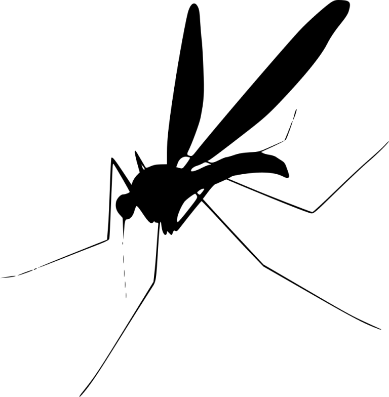 Insect fly clip art. Flies clipart mosquito