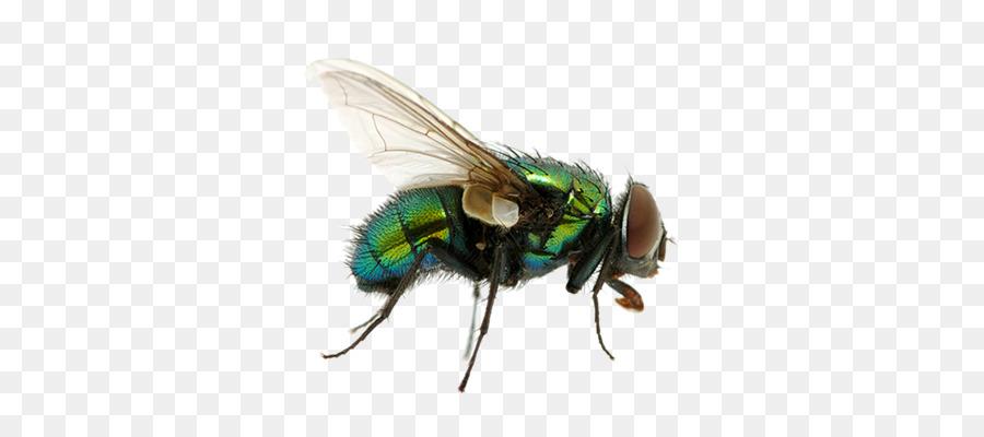 Cartoon wing transparent clip. Flies clipart mosquito