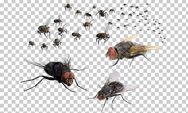 Fly png animals arthropod. Flies clipart mosquito