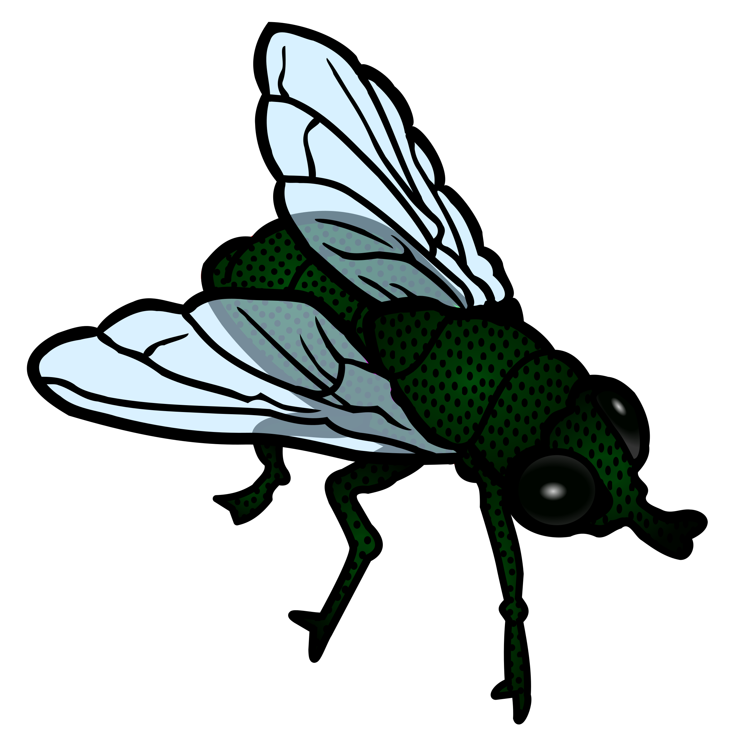 Fly clipart insect. Coloured big image png