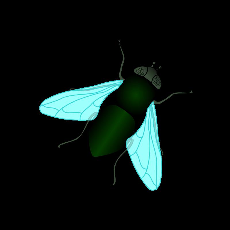 Fly clipart fruit fly. Jokingart com
