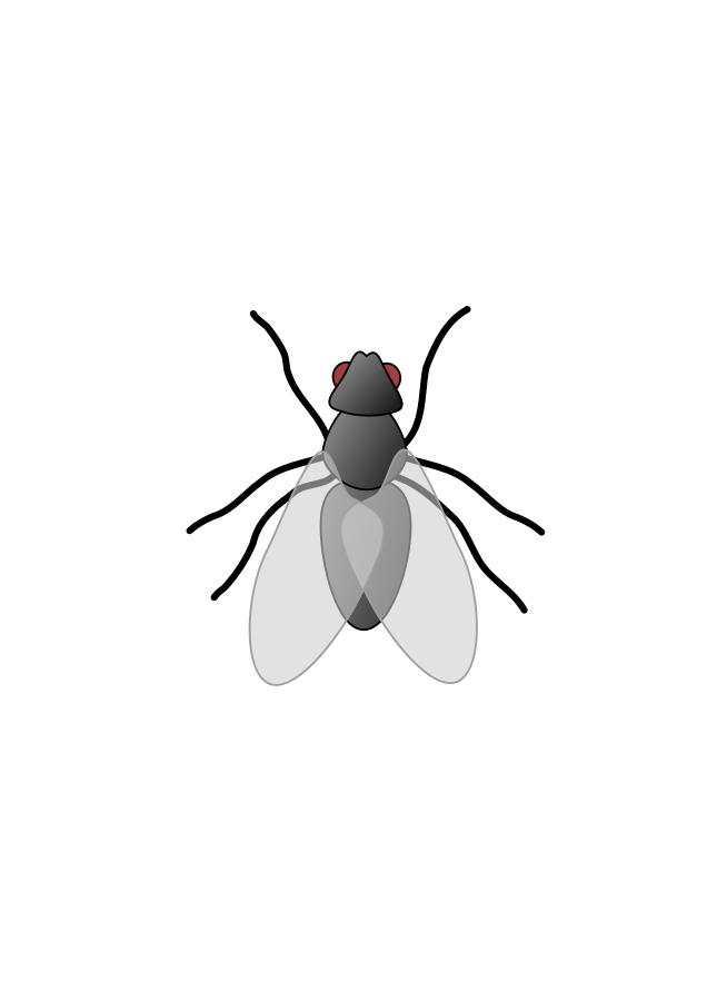 Flying clipart tiny. Fly png transparent hd