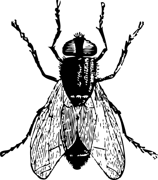 Flies drawing at getdrawings. Insects clipart black and white