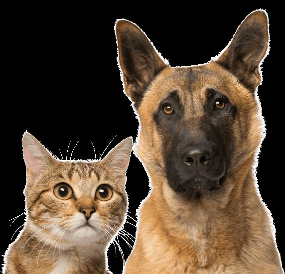 Provecta pet for veterinarians. Flies clipart vets
