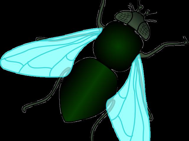 flies huge freebie. Fly clipart flying fly