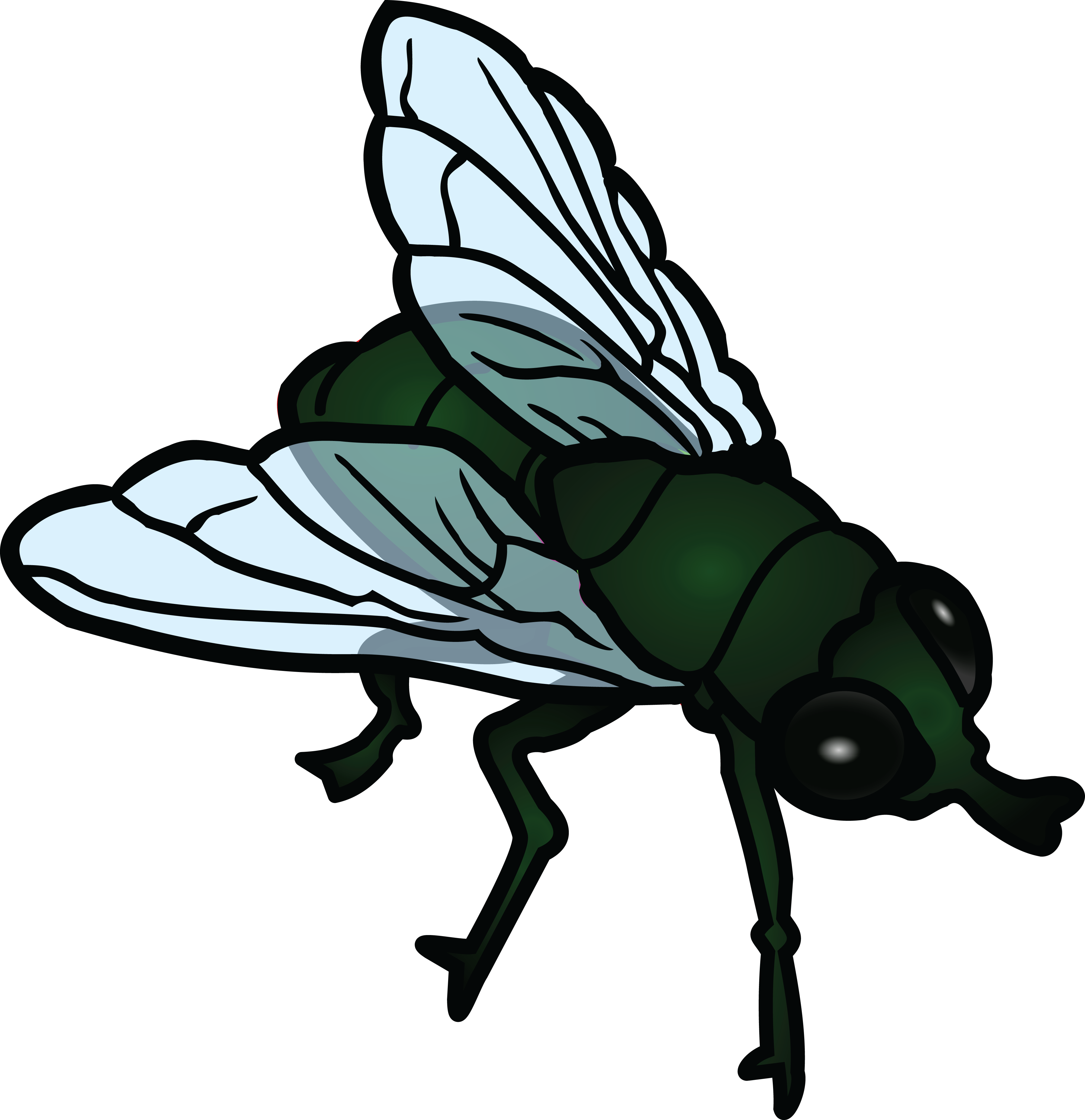 Collection of free flies. Fly clipart winged insect