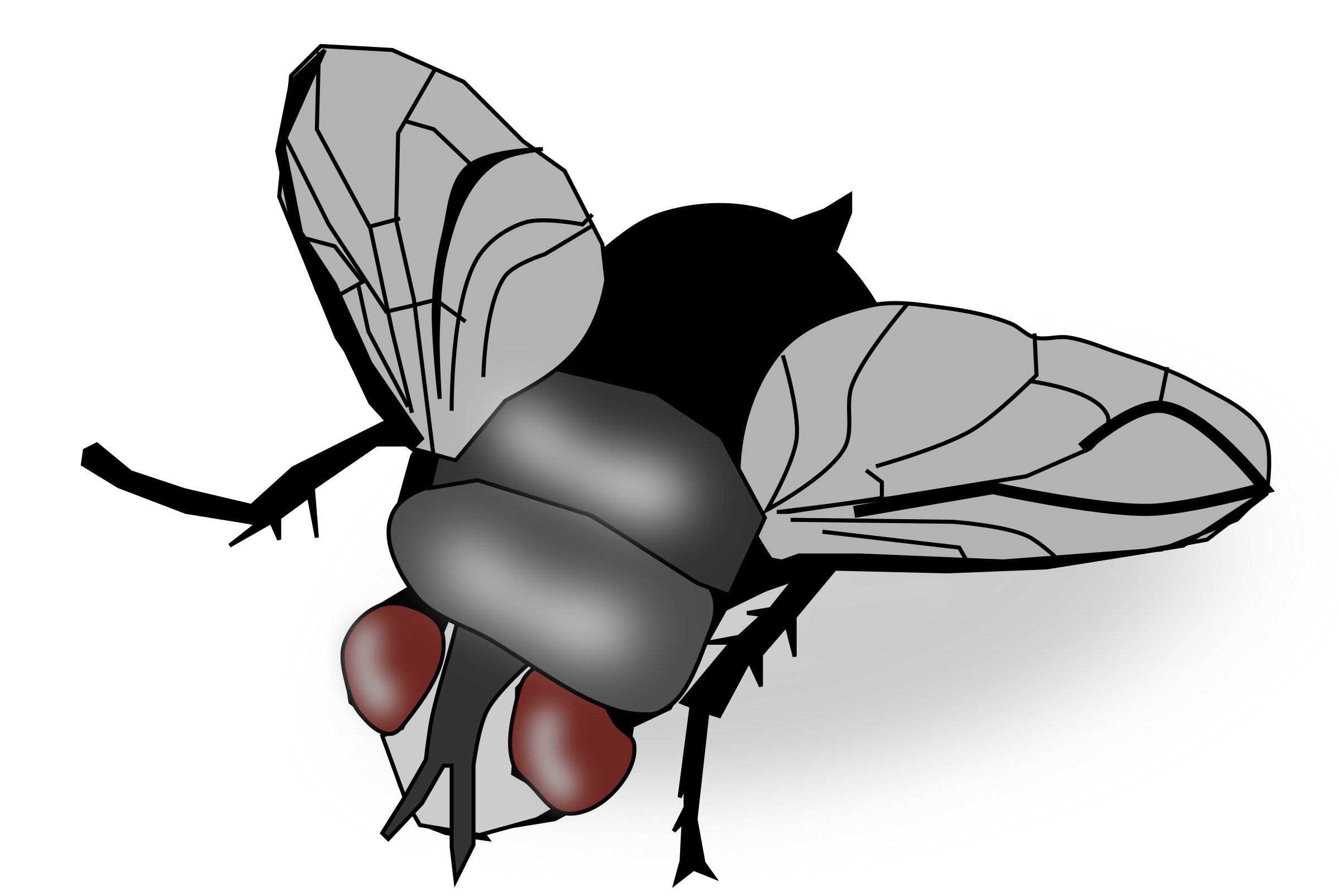 Clip art transprent png. Fly clipart insect