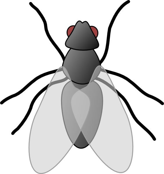 Fly bug clip art. Insect clipart different insect