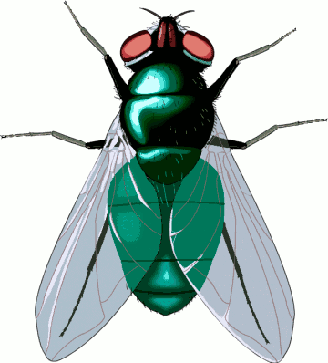 Fly clipart insect. Free cliparts download clip