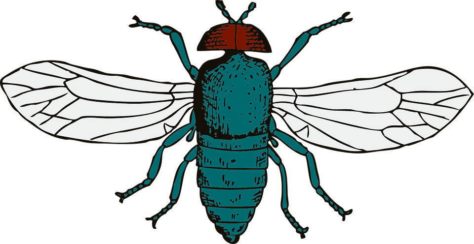Fly clipart winged insect. Collection of free flies