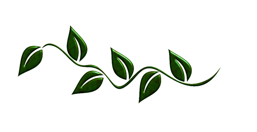 Leaf clipart boarder. Green leaves png by